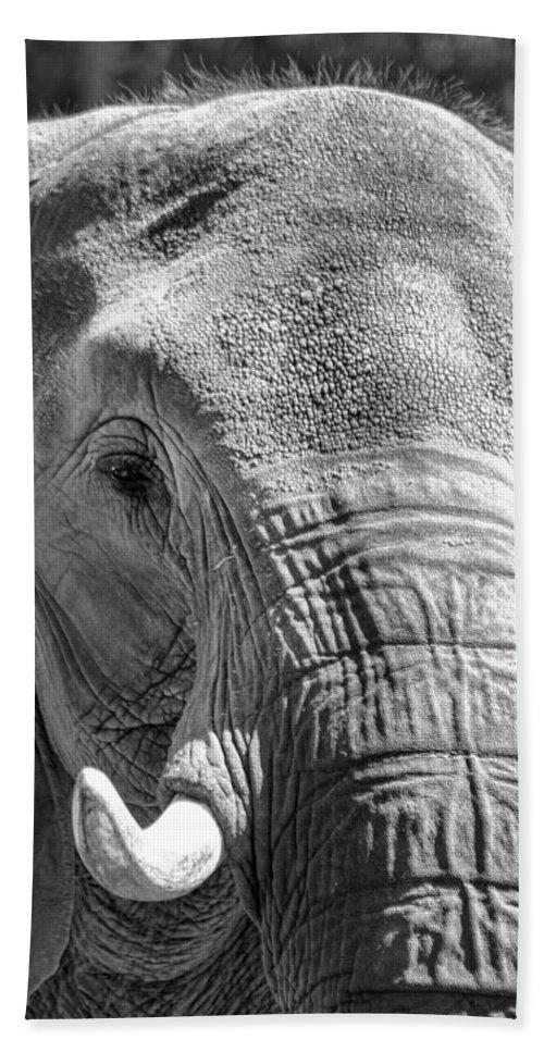 Elephant Bath Sheet featuring the photograph Sleepy Elephant Lady Black And White by Kathy Clark