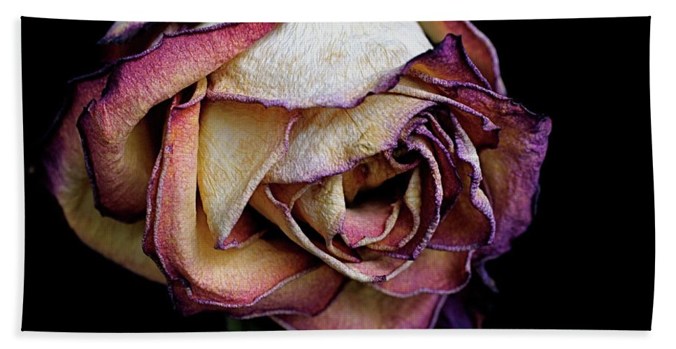 Dried Flower Bath Towel featuring the photograph Slow Fade by Rona Black