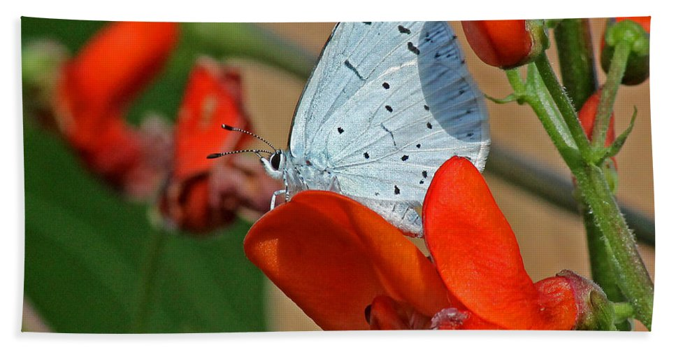 Blue Butterfly Hand Towel featuring the photograph Small Blue Butterfly by Tony Murtagh