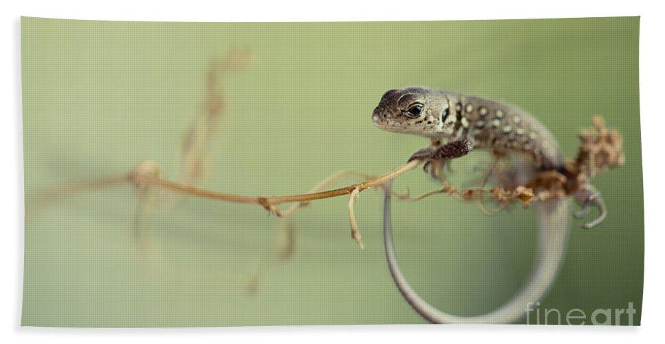 Blaminsky Hand Towel featuring the photograph Small Lizard Sitting On The Branch by Jaroslaw Blaminsky