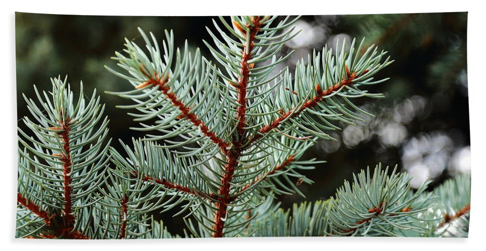 Pine Trees Hand Towel featuring the photograph Small Pine by Scott Hill