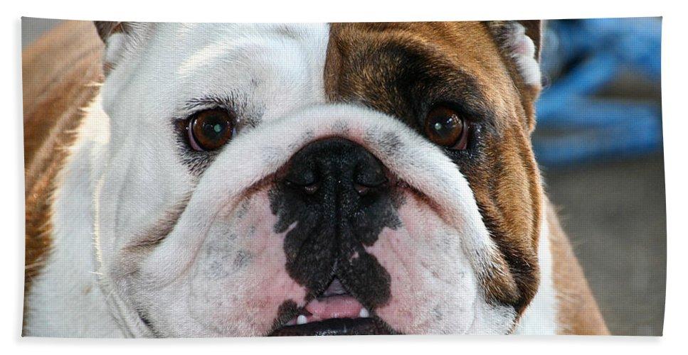 Animal Bath Sheet featuring the photograph Smashface by Susan Herber