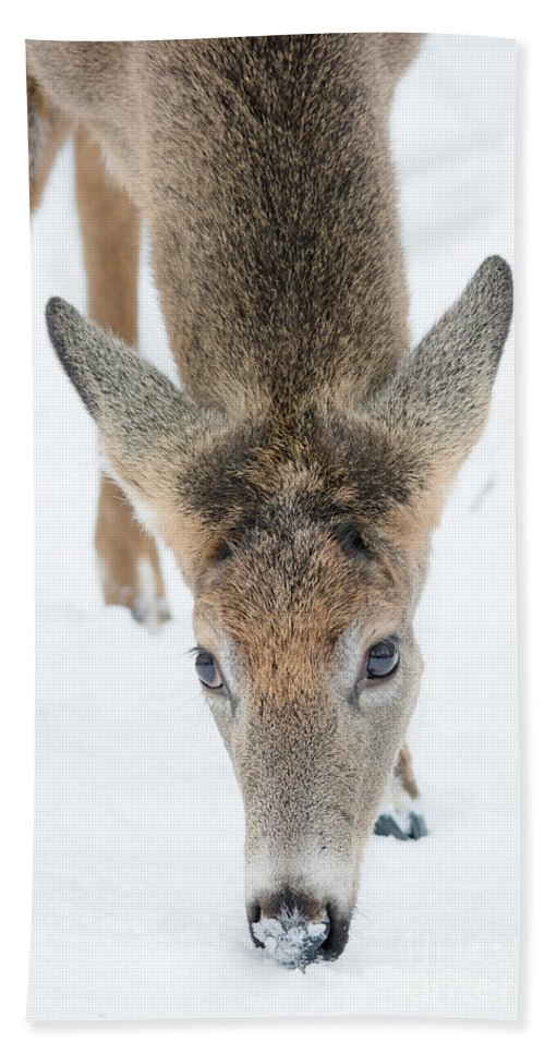 Landscape Hand Towel featuring the photograph Snacking Deer by Cheryl Baxter