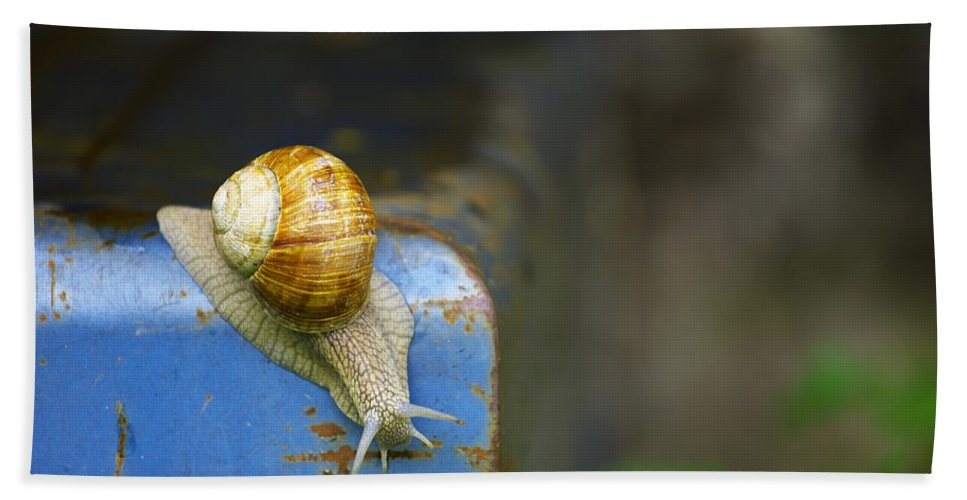 Snail Hand Towel featuring the photograph Snail by Ivan Slosar