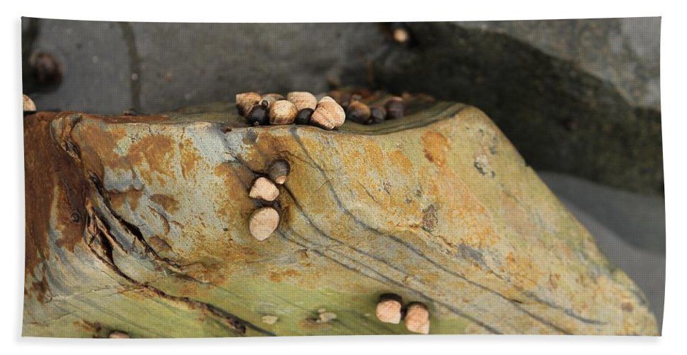 Still Life Hand Towel featuring the photograph Snails Converge by Michael Saunders
