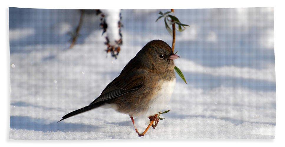 Snow Bath Sheet featuring the photograph Snow Bird by Todd Hostetter