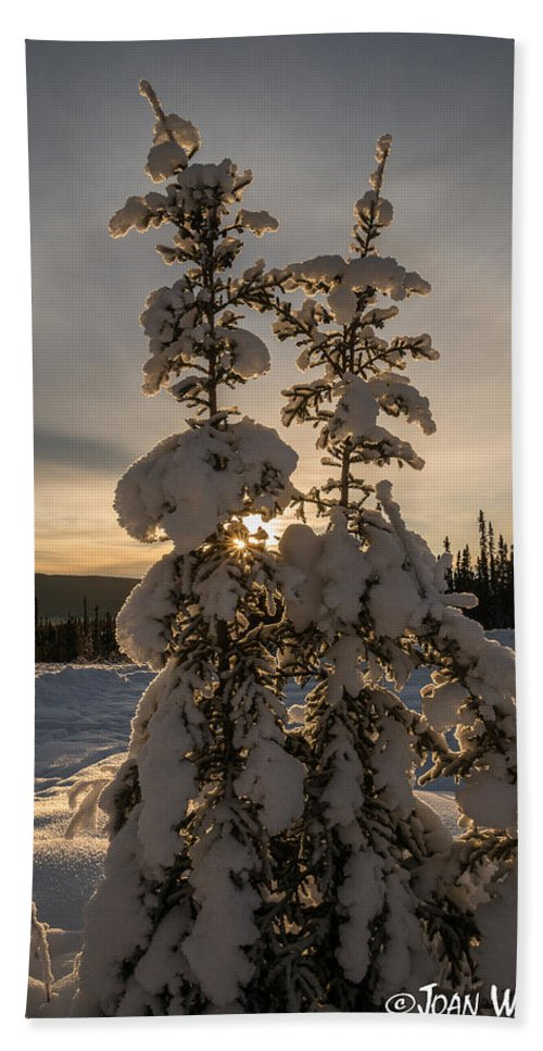 Alaska Bath Sheet featuring the photograph Snow Capped Sitka Spruce by Joan Wallner