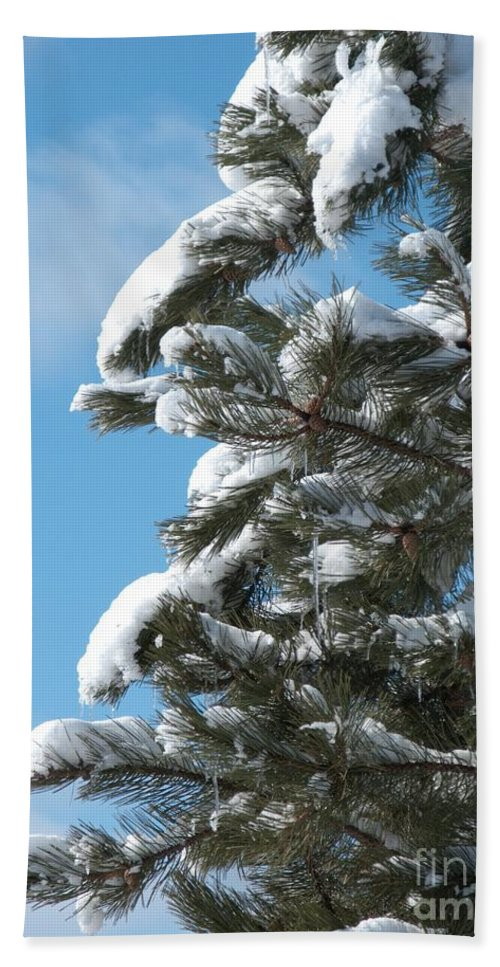 Snow Bath Sheet featuring the photograph Snow-clad Pine by Ann Horn
