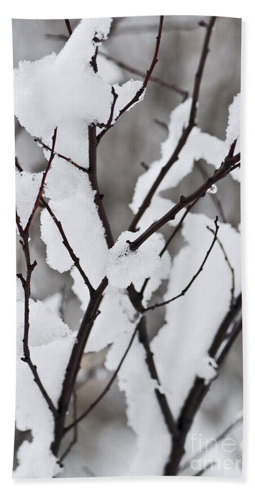 Winter Hand Towel featuring the photograph Snow Covered Branches by Elena Elisseeva