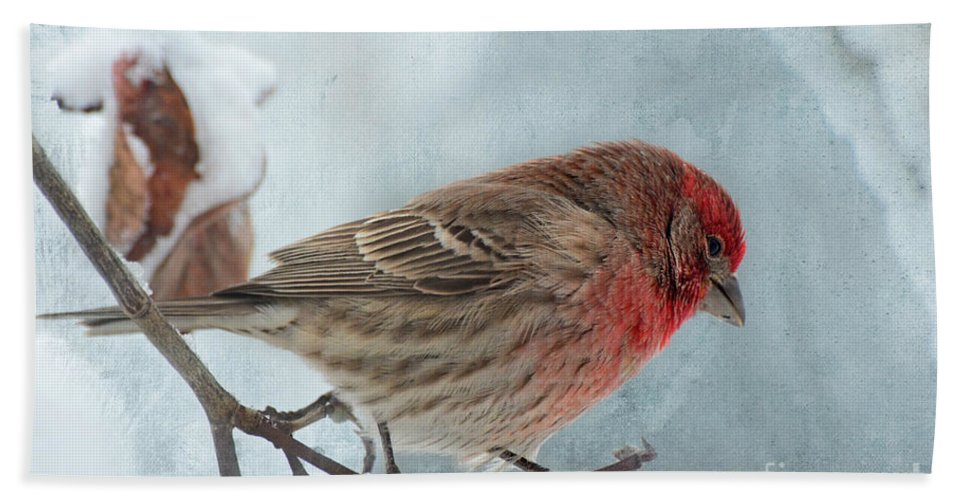Nature Hand Towel featuring the photograph Snow Day Housefinch With Texture by Debbie Portwood