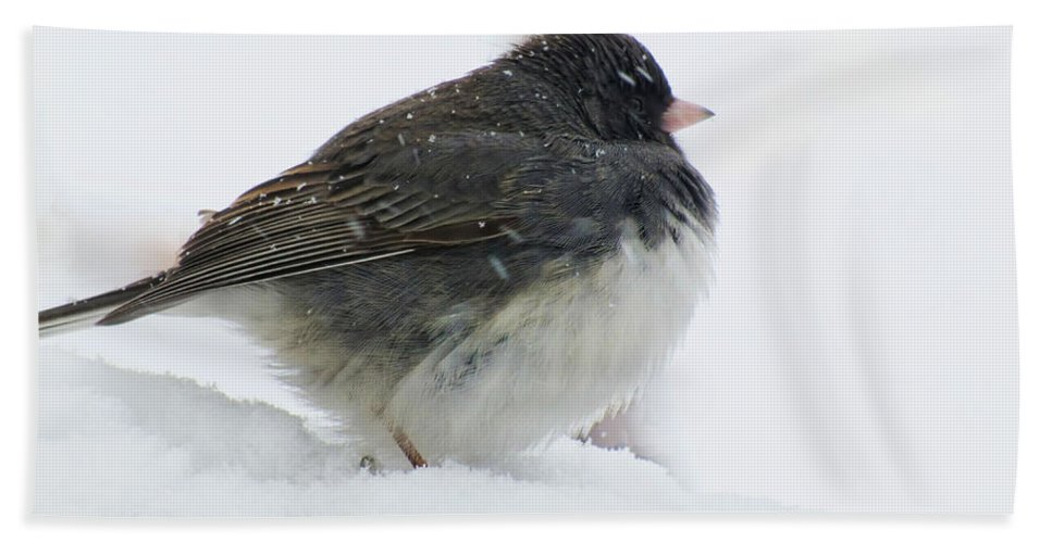 Nature Bath Sheet featuring the photograph Snow Day Junco by Debbie Portwood