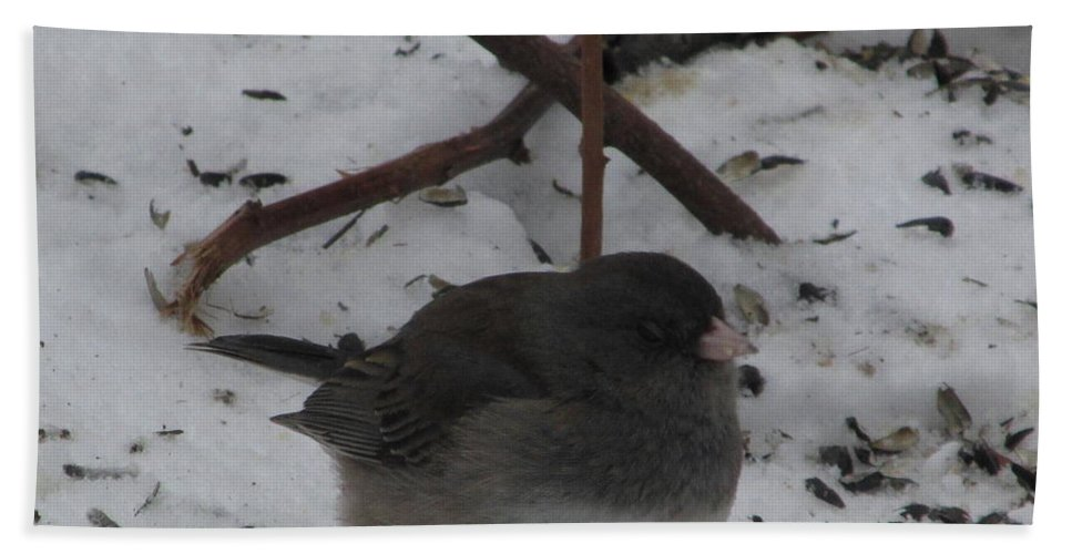 Snow Finch Winter Birds Snow Birds Avian Diversity Song Birds Of North American Little Gray Bird Small Gray Bird Ornithology Bath Sheet featuring the photograph Snow Finch by Joshua Bales