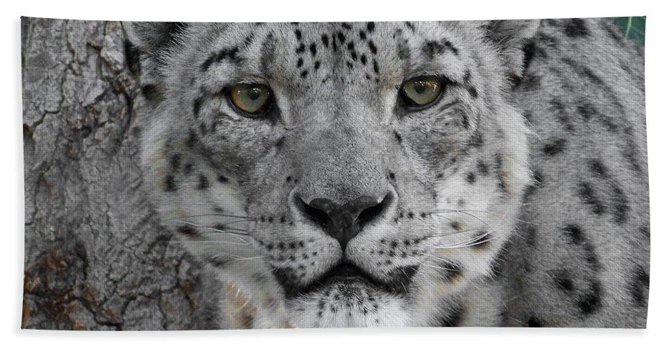 Animals Bath Sheet featuring the photograph Snow Leopard 5 by Ernie Echols