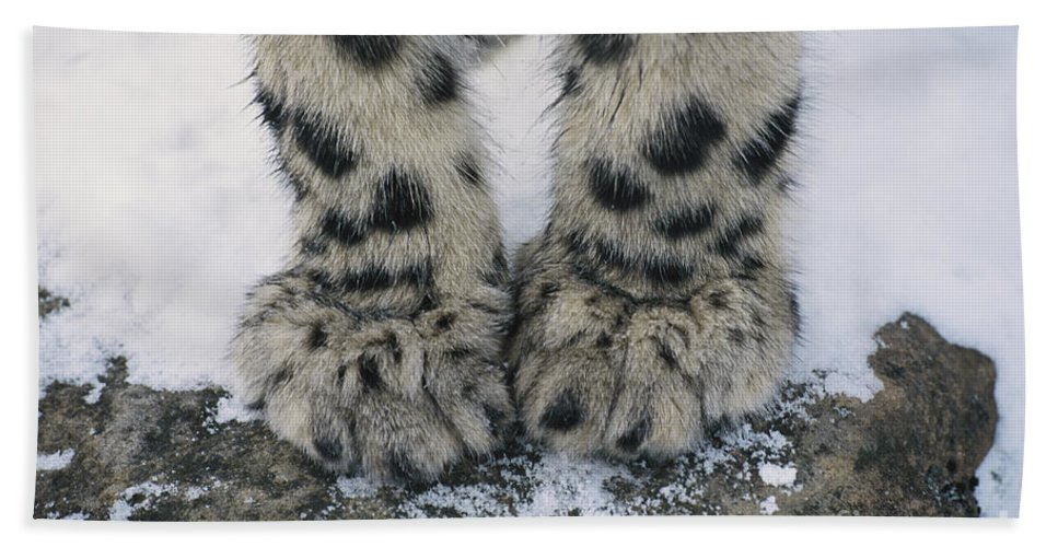 Snow Leopard Bath Sheet featuring the photograph Snow Leopard Feet by Thomas and Pat Leeson