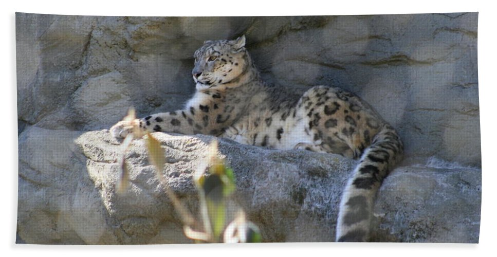 Leopard Bath Sheet featuring the photograph Snow Leopard  No.2 by Neal Eslinger