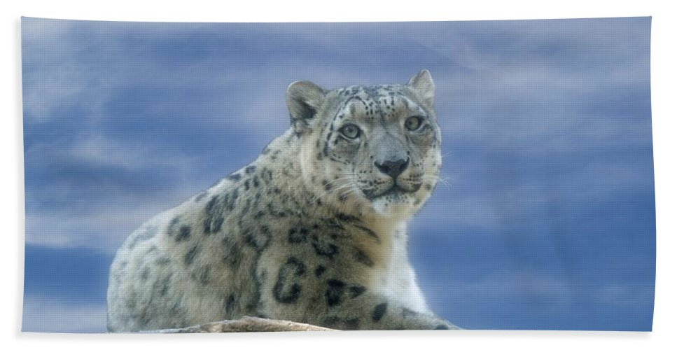 Snow Leopard Hand Towel featuring the photograph Snow Leopard by Sandy Keeton