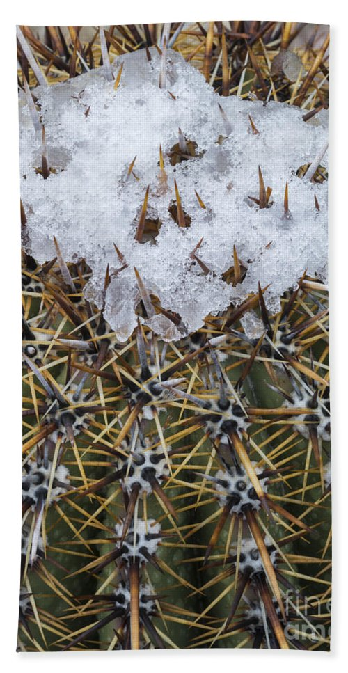 Nature Bath Sheet featuring the photograph Snow On Top Of Small Saguaro Cactus by John Shaw