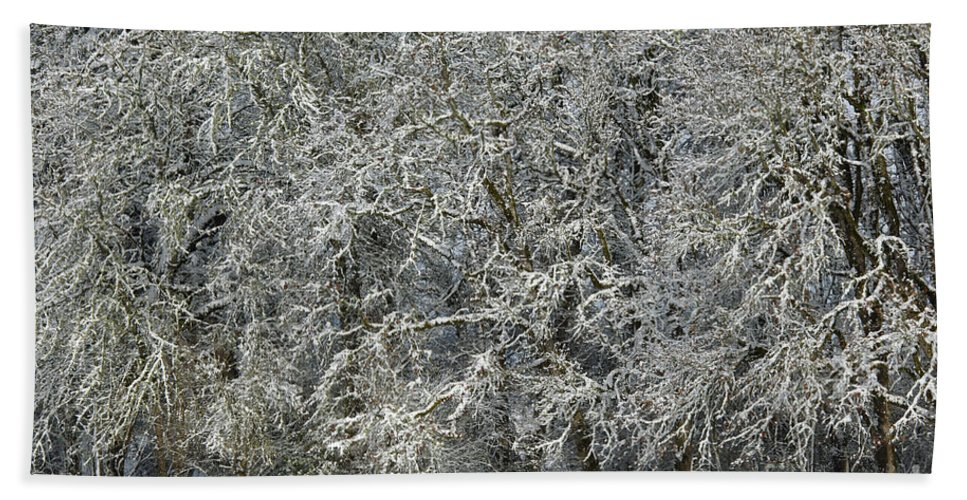 Nature Bath Sheet featuring the photograph Snow On Trees by John Shaw