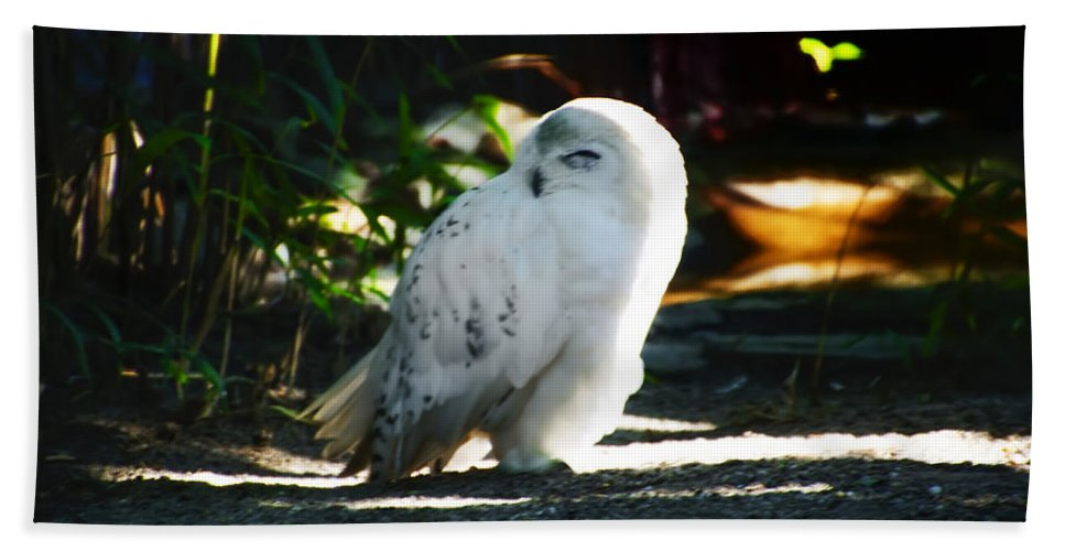 Snow Bath Sheet featuring the photograph Snow Owl by Bill Cannon