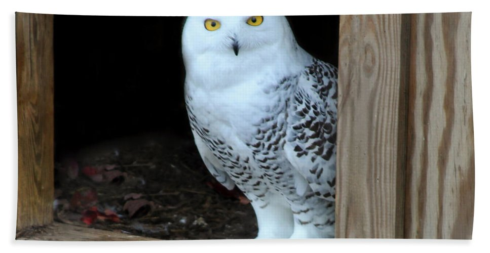 Owl Hand Towel featuring the photograph Snow Owl by Sharon Horn