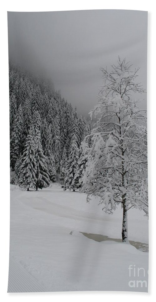 Snow Hand Towel featuring the photograph Snow Tree by Christiane Schulze Art And Photography