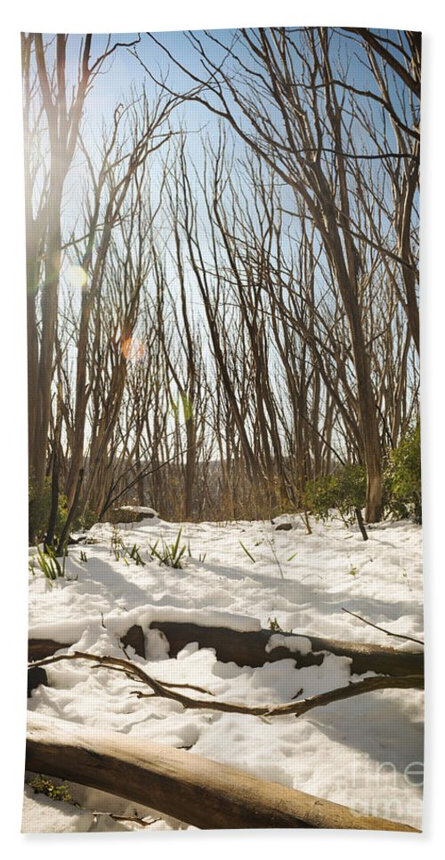 Snow Hand Towel featuring the photograph Snow Trees by Tim Hester