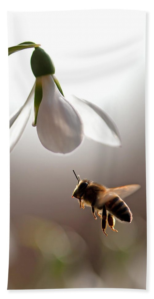 Snowdrops And The Bee Hand Towel featuring the photograph Snowdrops And The Bee by Torbjorn Swenelius
