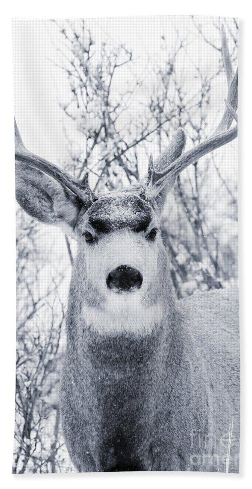 Deer Hand Towel featuring the photograph Snowstorm Deer by Steve Krull