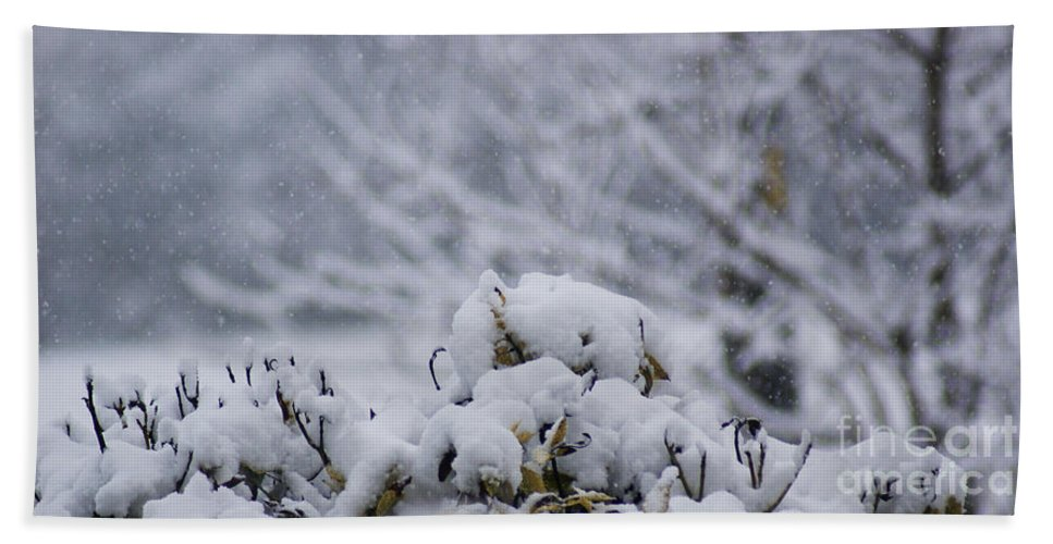 Snow Hand Towel featuring the photograph Snowy by Carol Lynch