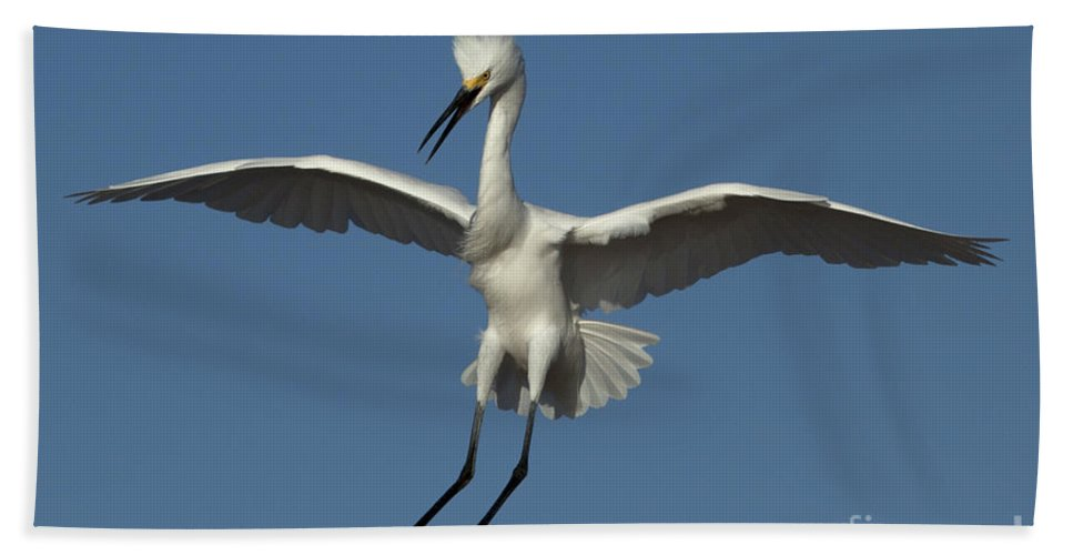 Snowy Egret Bath Sheet featuring the photograph Snowy Egret Photo by Meg Rousher