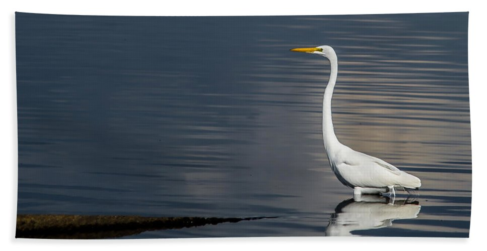 Snow Hand Towel featuring the photograph Snowy Egret by Scott Hervieux