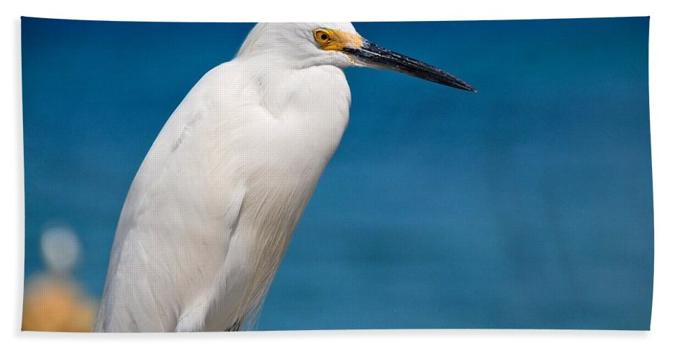 White Hand Towel featuring the photograph Snowy Egret Takin' Five by David Coleman