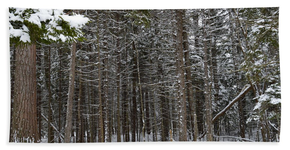 Forest Bath Sheet featuring the photograph Snowy Forest In Acadia by Meandering Photography