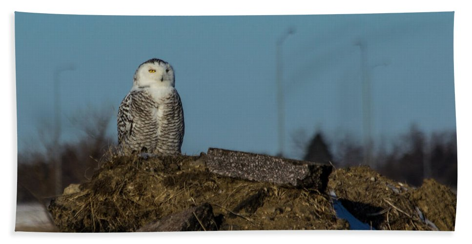 Snowy Owl Hand Towel featuring the photograph Snowy Owl by Aaron J Groen