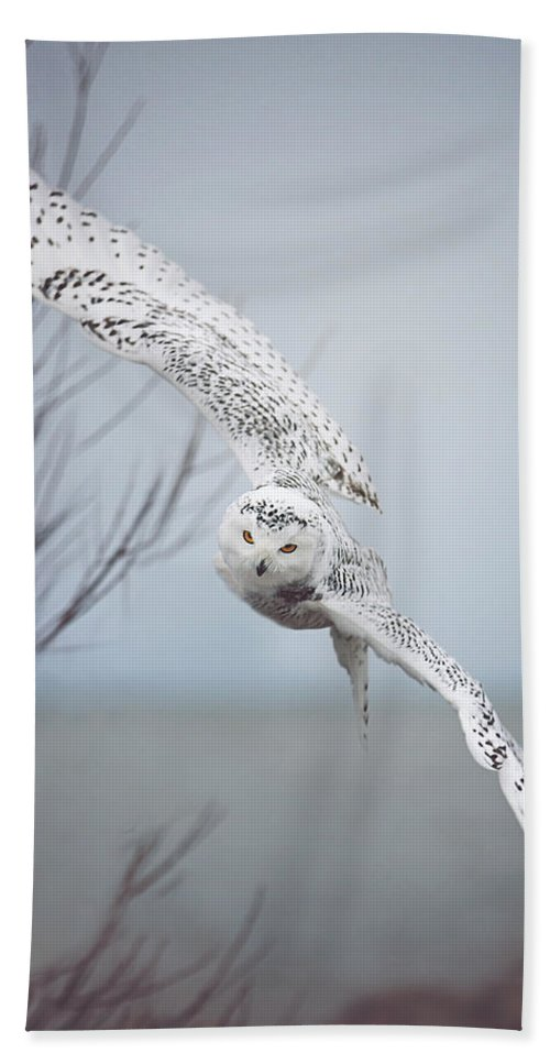 Wildlife Bath Towel featuring the photograph Snowy Owl In Flight by Carrie Ann Grippo-Pike