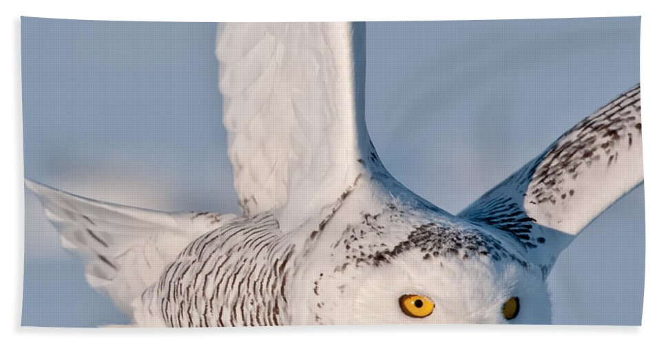 Snowy Owl Bath Sheet featuring the photograph Snowy Owl Pictures 47 by World Wildlife Photography
