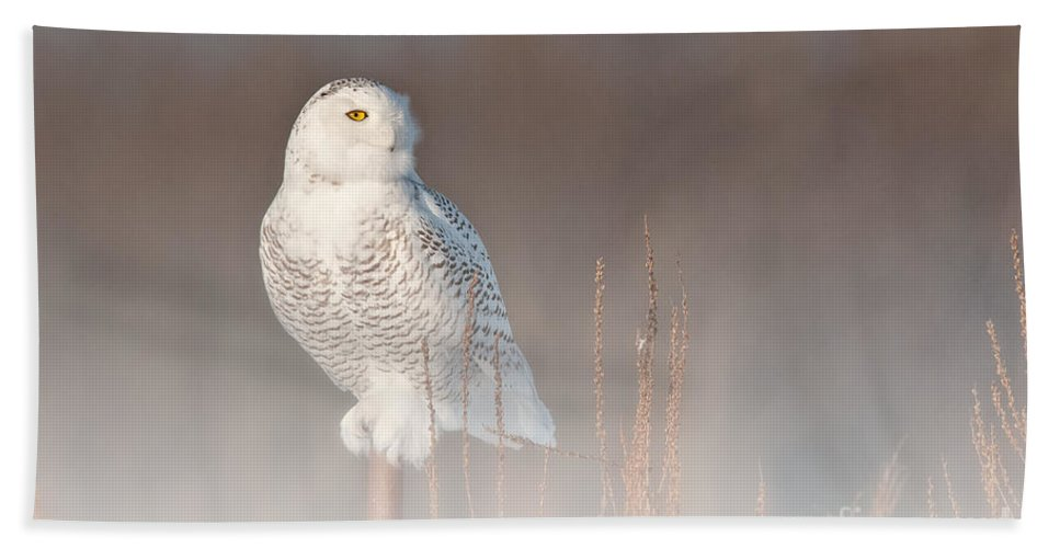 Snowy Owl Bath Sheet featuring the photograph Snowy Owl Pictures 67 by World Wildlife Photography