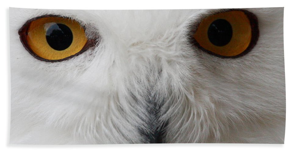 Snowy Owl Bath Sheet featuring the photograph Snowy Owl Stare by Andrew McInnes
