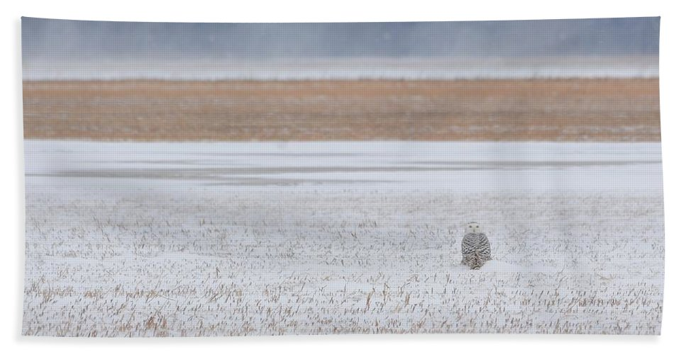 Bird Hand Towel featuring the photograph Snowy Owl Two by Charles Owens