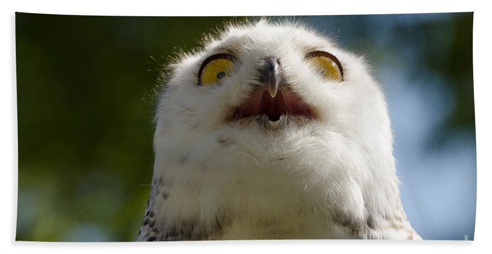 Snowy Bath Sheet featuring the photograph Snowy Owl With Big Eyes by Les Palenik