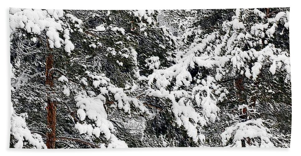#winter #snow Hand Towel featuring the photograph Snowy Pines by Kathleen Struckle