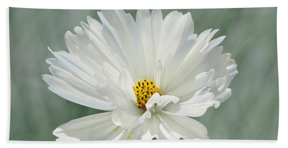 Flower Bath Sheet featuring the photograph Snowy White Cosmos by Kim Hojnacki