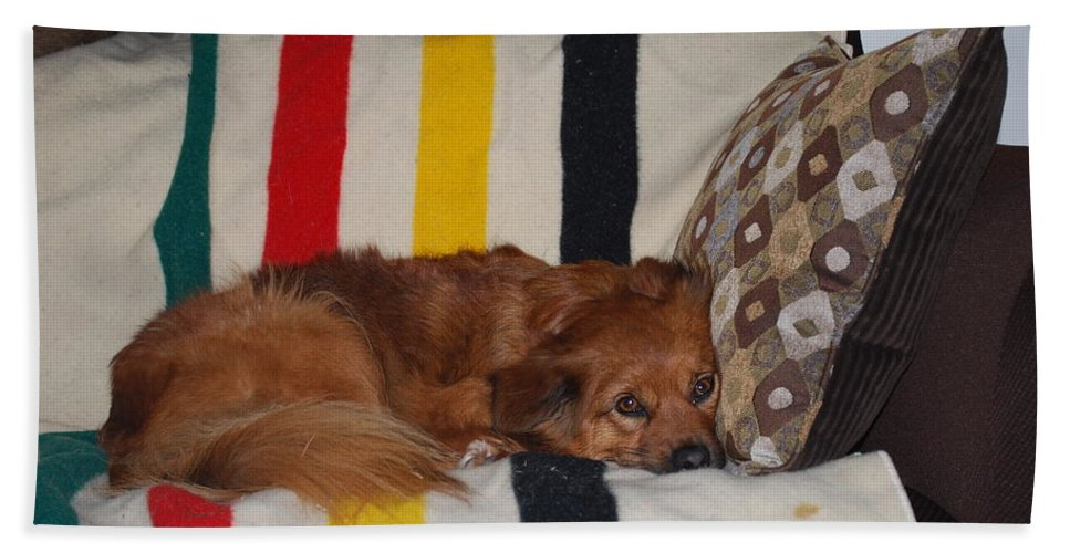 Lady Likes Her Pillow Hand Towel featuring the photograph Snuggle Time by Robert Floyd