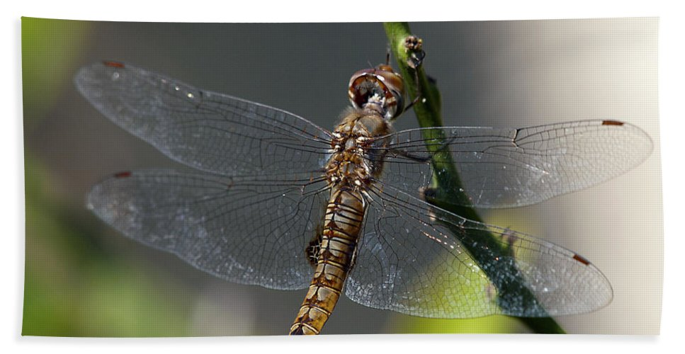 Dragonfly Hand Towel featuring the photograph Soaking Rays by Joe Schofield