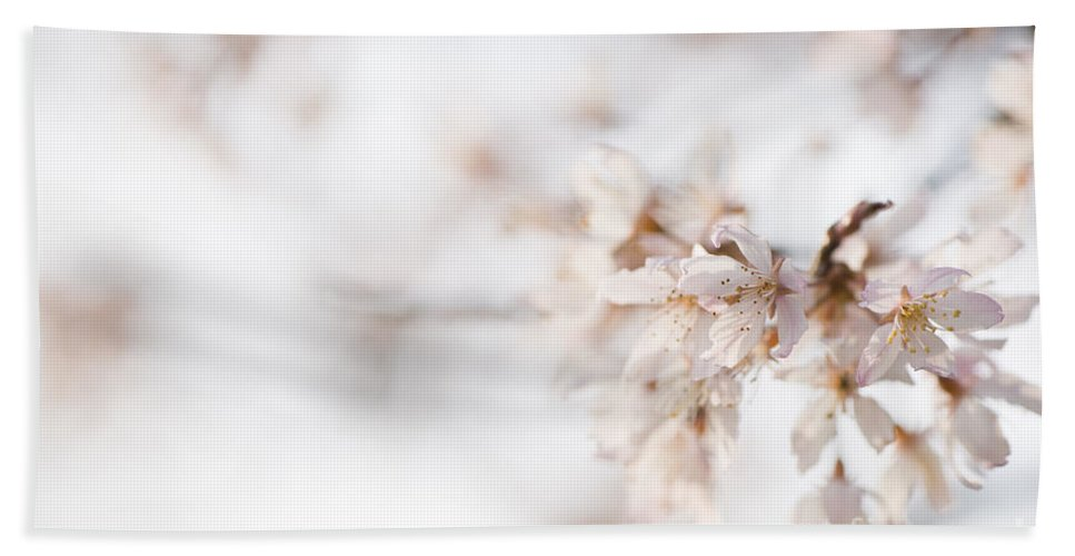 Art Hand Towel featuring the photograph Softly Blossom by Anne Gilbert