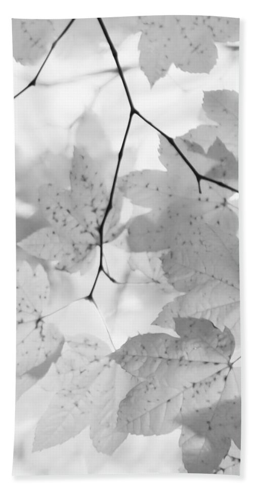 Leaf Hand Towel featuring the photograph Softness Of Maple Leaves Monochrome by Jennie Marie Schell