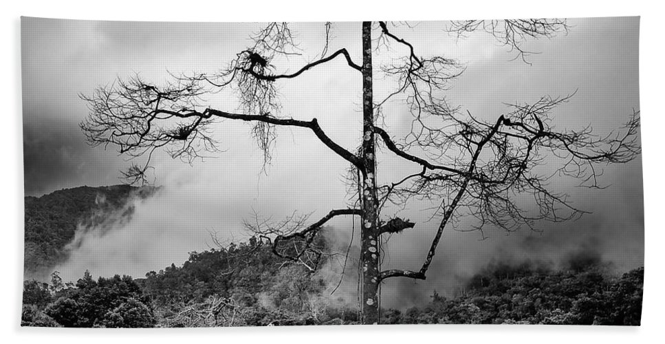 Cameron Highlands Bath Towel featuring the photograph Solitary Tree by Dave Bowman