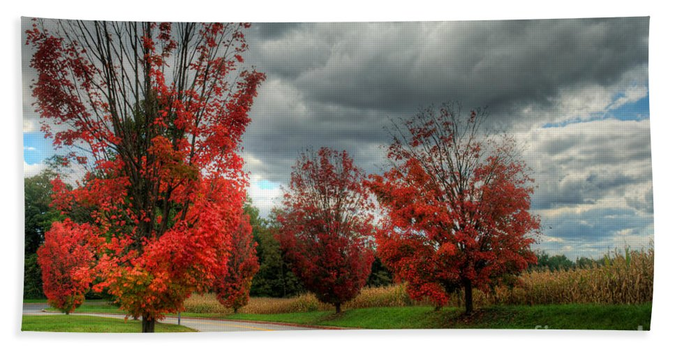Trees Hand Towel featuring the photograph Some Fall Colors by Mark Dodd