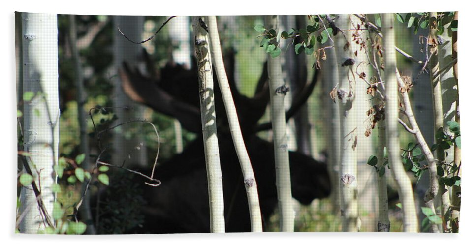 Bull Moose Photographs Bath Sheet featuring the photograph Something Big by Fiona Kennard