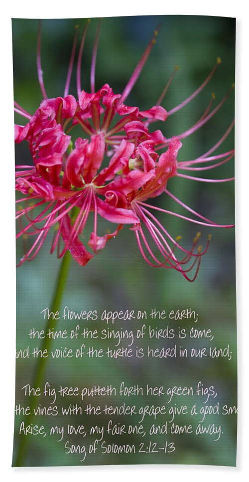 Spider Lily Hand Towel featuring the photograph Song Of Solomon - The Flowers Appear by Kathy Clark